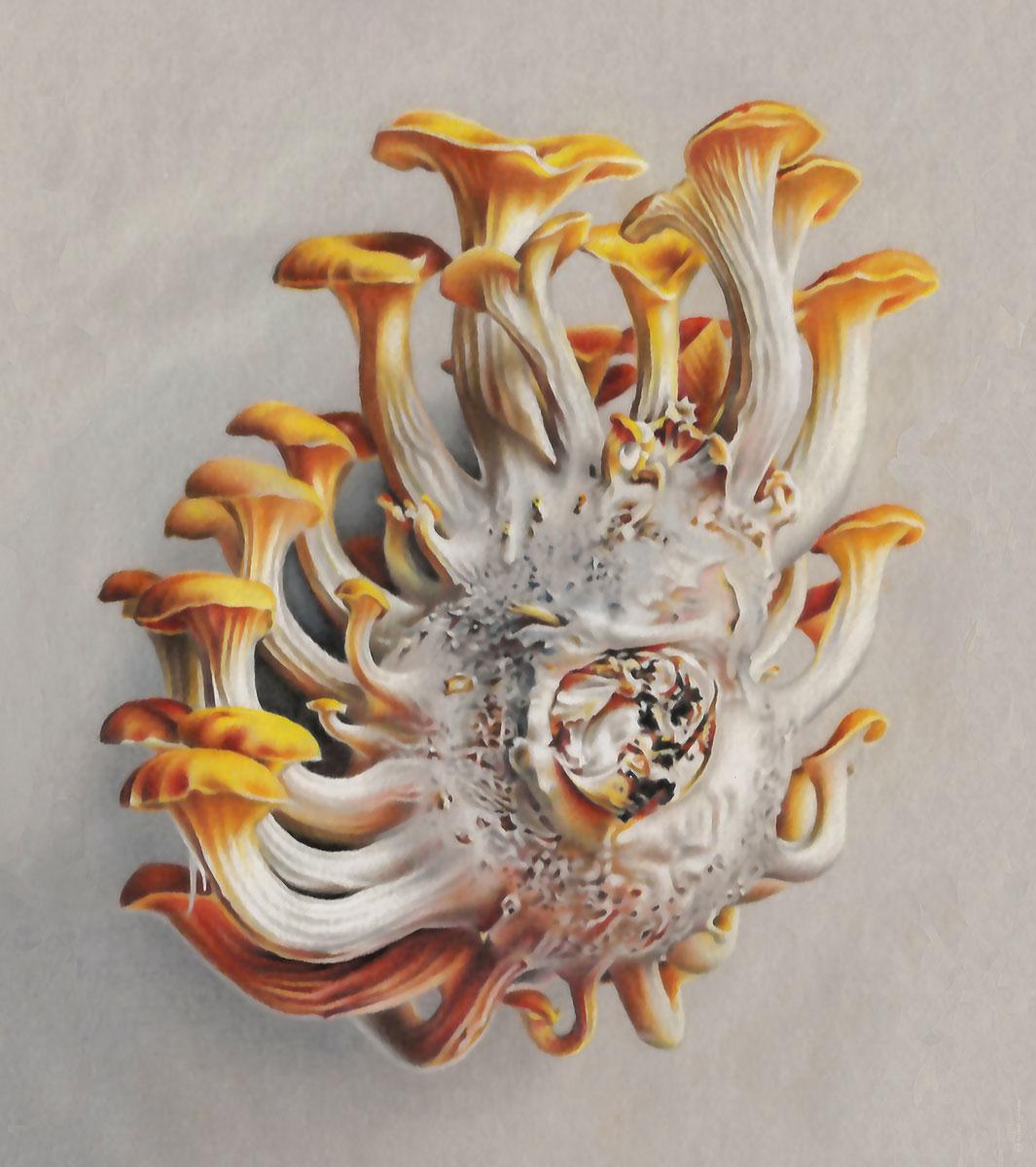 Goldener Austernpilz
