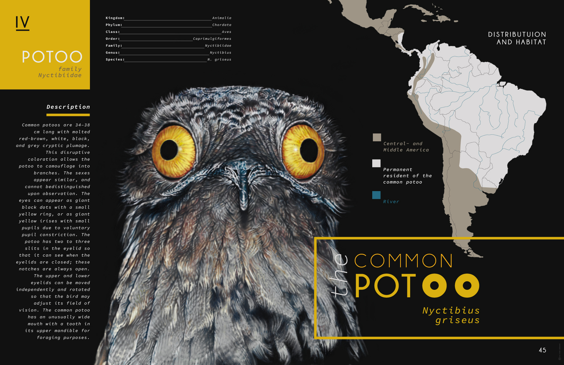common_potoo
