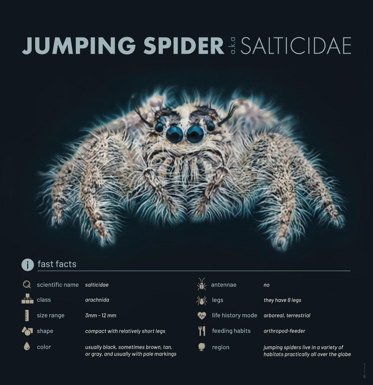 jumping_spider_3