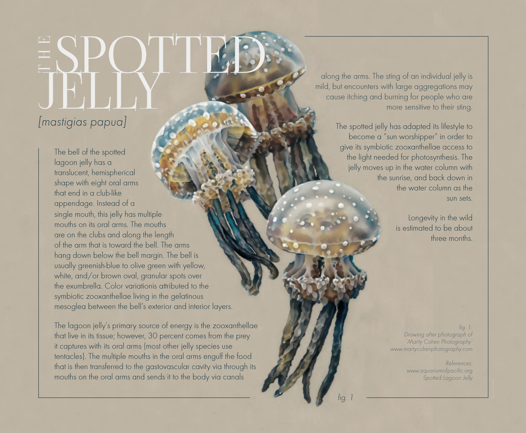 the_spotted_jelly_2