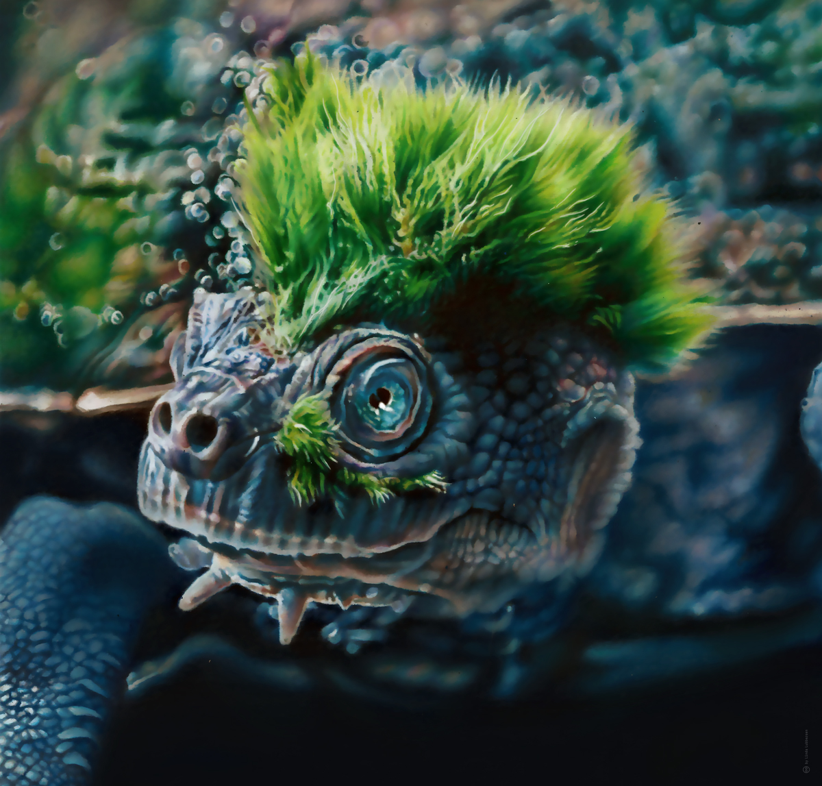 Mary_river_turtle_2