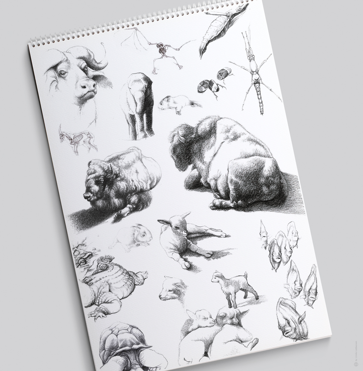 Zoological_studies_2
