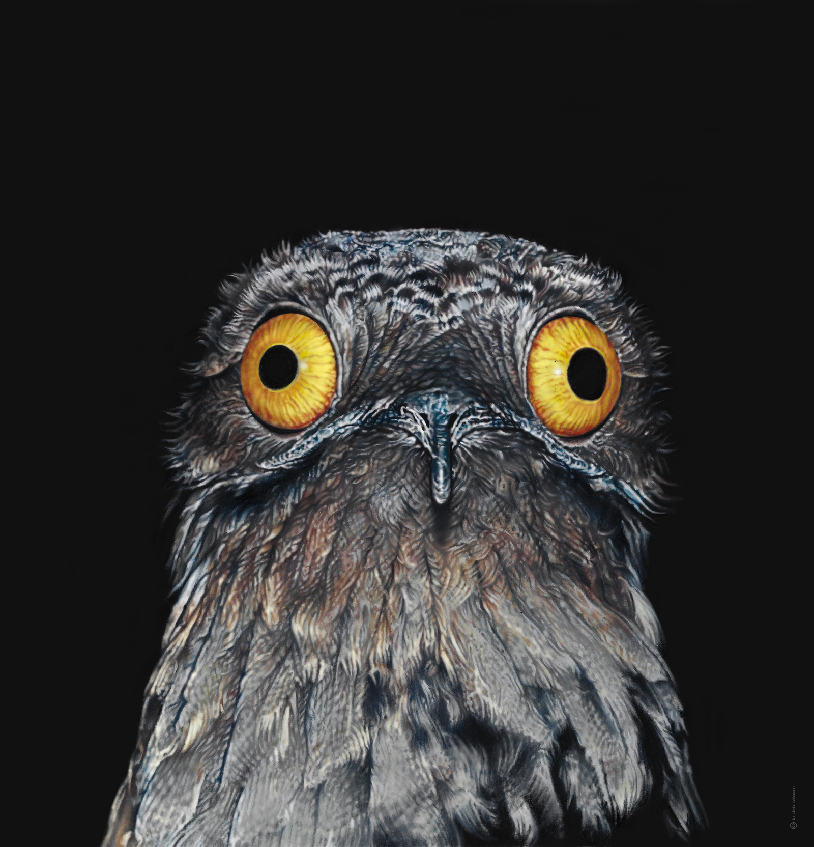 common_potoo_2