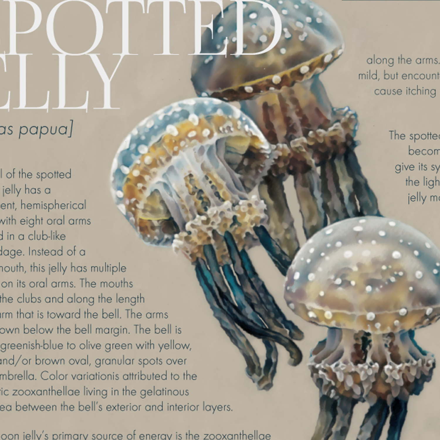 the_spotted_jelly